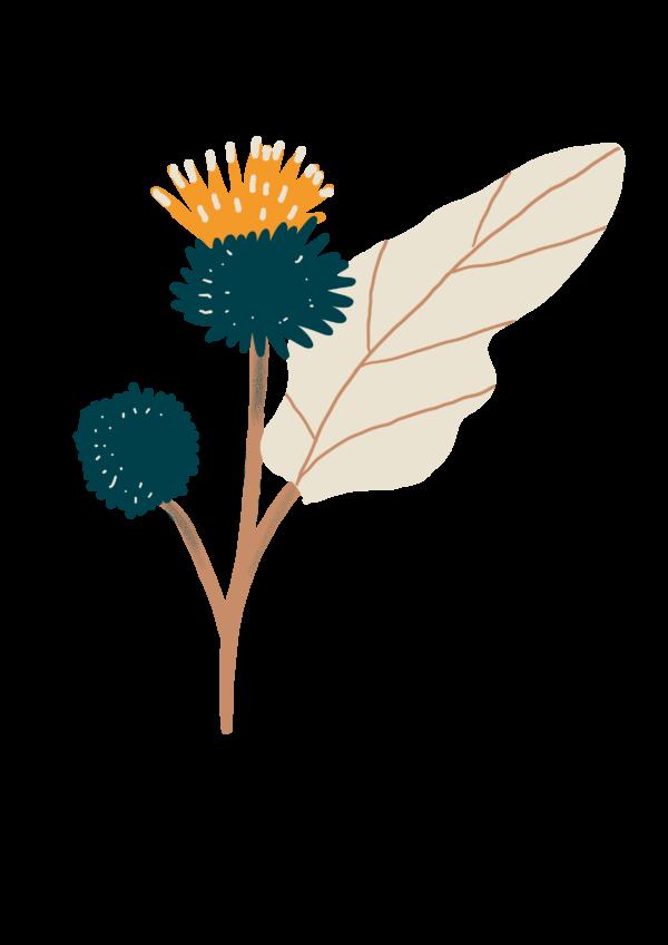 Bardane - herbo vrac bio