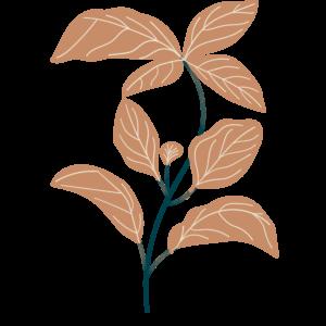Basilic bio Illustration Biohême