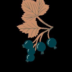 Cassis bio Illustration Biohême