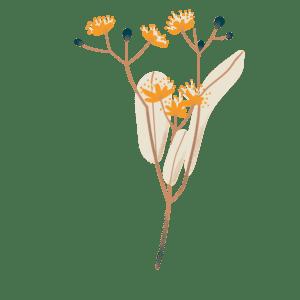 Biohême - Infusion bio - Tilleul vrac
